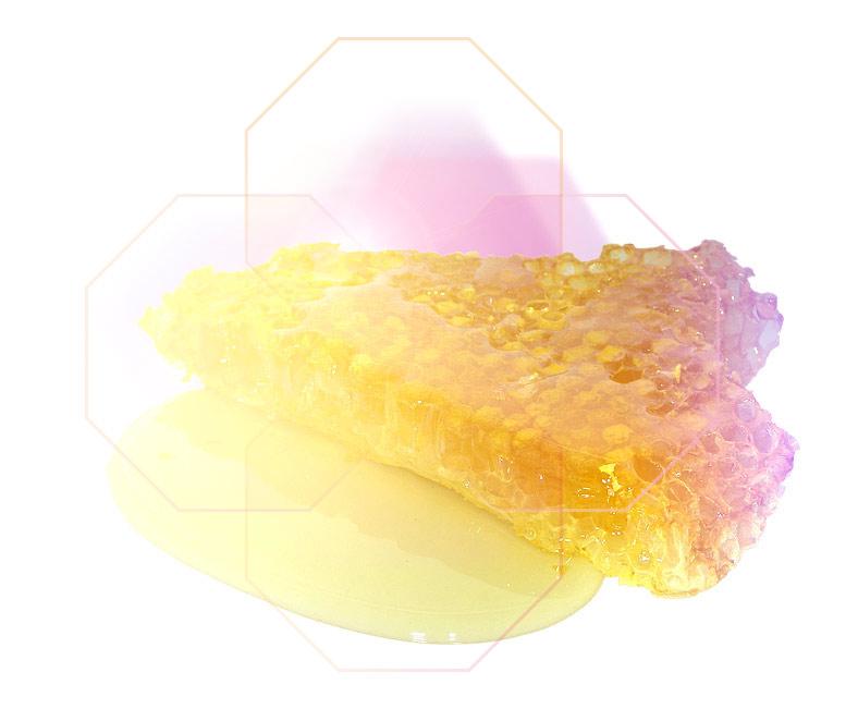 Honig Wachswaben